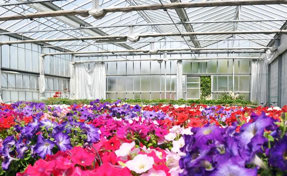 Floricoltura Loi - serra interno