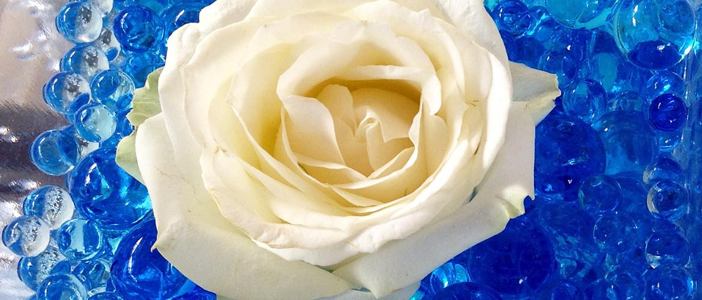 Floricoltura Loi - rosa bianca dettaglio